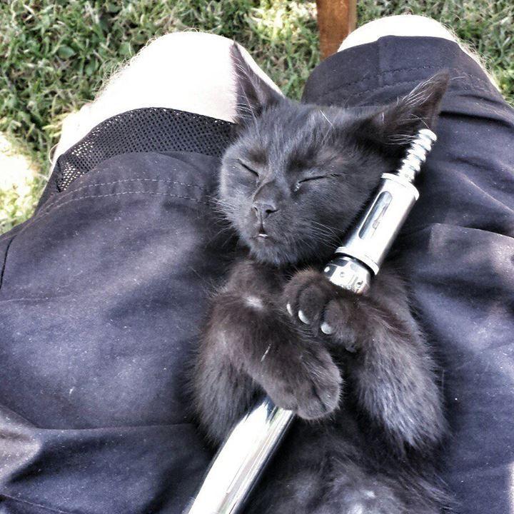 vape-cat